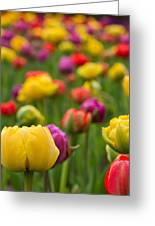 Triumphant Tulips Greeting Card