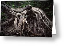 Troots Of A Fallen Tree By Wawa Ontario Greeting Card