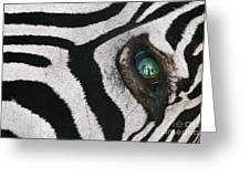 Trophy Hunter In Eye Of Dead Zebra Greeting Card