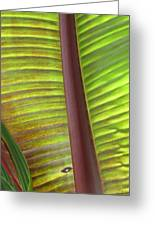 Tropical Banana Leaf Abstract Greeting Card