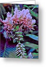 Rain Forest Greeting Card