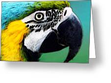 Tropical Bird - Colorful Macaw Greeting Card