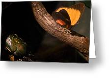 Tropical Butterfly And Rhinoceros Beetle Greeting Card