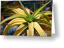 Tropical Cactus Greeting Card