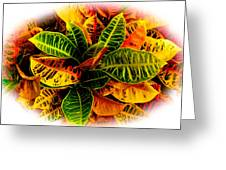 Tropical Croton Vignette Greeting Card by Lisa Cortez