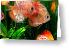 Tropical Discus Fish Group Greeting Card