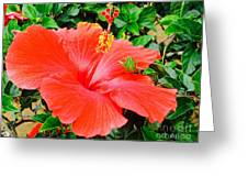 Tropical Explosion Greeting Card