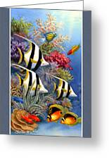 Tropical Fish A Greeting Card