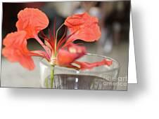 Tropical Flamboyant Flower Greeting Card