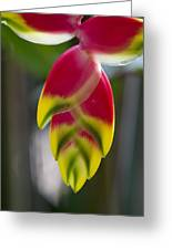 Tropical Flower 2 Greeting Card
