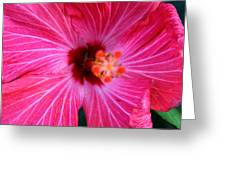 Tropical Flower Time Greeting Card