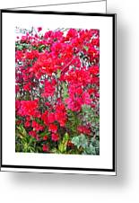 Tropical Flowers Of South Florida Greeting Card