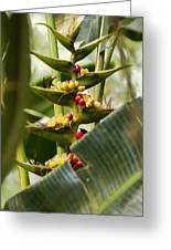Tropical Fountain Of Seeds Greeting Card