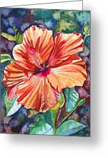 Tropical Hibiscus 5 Greeting Card