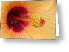 Tropical Hibiscus - Aruba Wind 01 Greeting Card