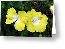 Tropical Hibiscus - Bonaire Wind 01 Greeting Card
