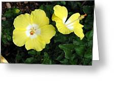 Tropical Hibiscus - Bonaire Wind 02 Greeting Card