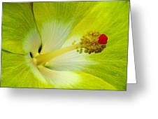 Tropical Hibiscus - Bonaire Wind 03a Greeting Card