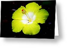 Tropical Hibiscus - Bonaire Wind 04a Greeting Card