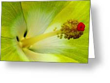 Tropical Hibiscus - Bonaire Wind 06a Greeting Card