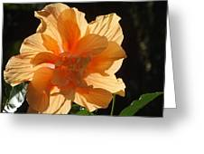 Tropical Hibiscus In The Sun Greeting Card