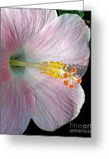 Tropical Hibiscus Greeting Card by Kaye Menner