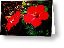Tropical Hibiscus - Starry Wind 01a Greeting Card
