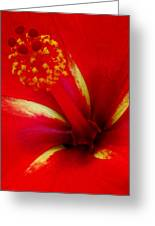 Tropical Hibiscus - Starry Wind 03a Greeting Card