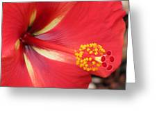 Tropical Hibiscus - Starry Wind 04 Greeting Card