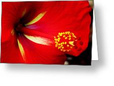 Tropical Hibiscus - Starry Wind 04a Greeting Card