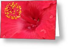 Tropical Hibiscus - Trinidad Wind 01 Greeting Card