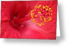 Tropical Hibiscus - Trinidad Wind 02 Greeting Card