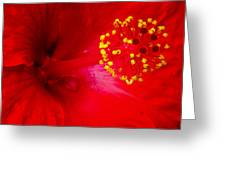 Tropical Hibiscus - Trinidad Wind 02a Greeting Card