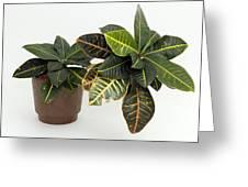 Tropical Houseplant Greeting Card