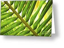 Tropical Leaf Greeting Card by Elena Elisseeva