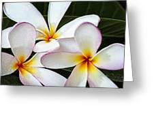 Tropical Maui Plumeria Greeting Card