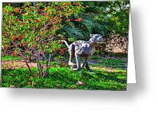 Tropical Mountain Lion Greeting Card