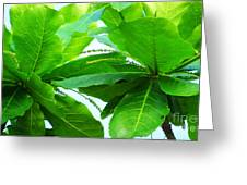 Tropical Noni Leaves Greeting Card