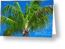 Tropical Palm Portrait Greeting Card