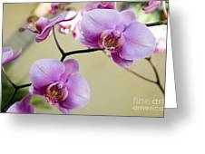 Tropical Radiant Orchid Flowers Greeting Card