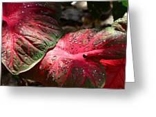 Tropical Rain - Botanical Art By Sharon Cummings Greeting Card