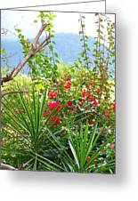 Tropical Red Against Cool Mountain Mists Greeting Card