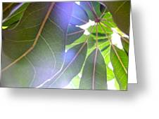 Tropical Shade Greeting Card