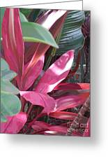 Tropical Spice Greeting Card