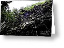 Tropical Vines Greeting Card