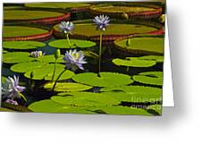 Tropical Water Lily Flowers And Pads Greeting Card