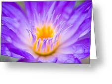 Tropical Waterlily Glow Greeting Card