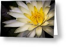 Tropical White Water Lily Greeting Card