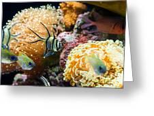 Tropical Wonderland - Banggai Cardinalfish Greeting Card