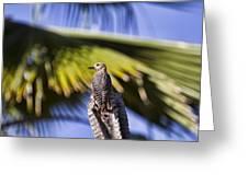Tropical Woodpecker Greeting Card